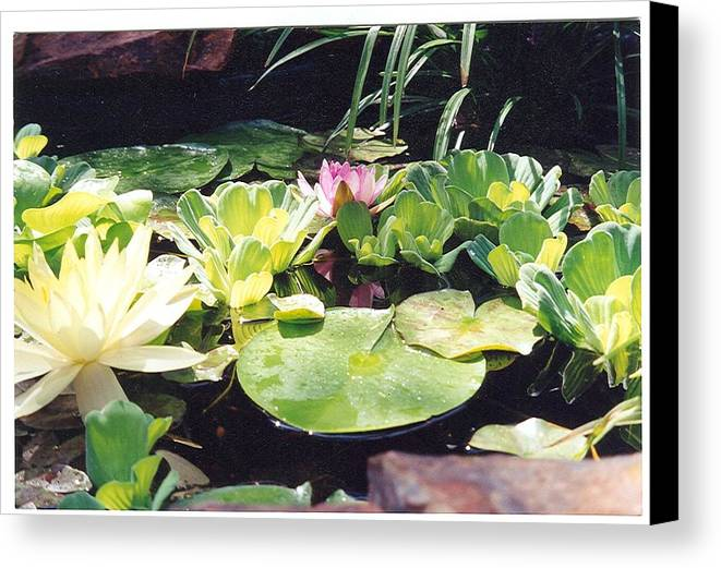 Waterlillies Canvas Print featuring the photograph Morning Pond by Laura Johnson