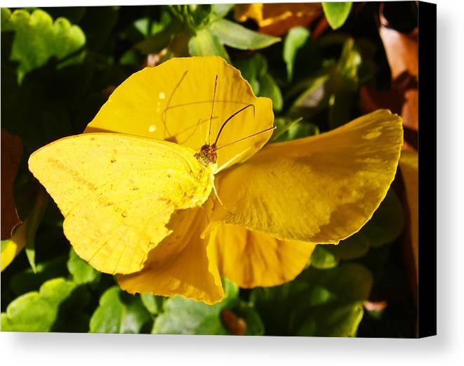 Floral Canvas Print featuring the photograph Nature's Disquise V by James Granberry