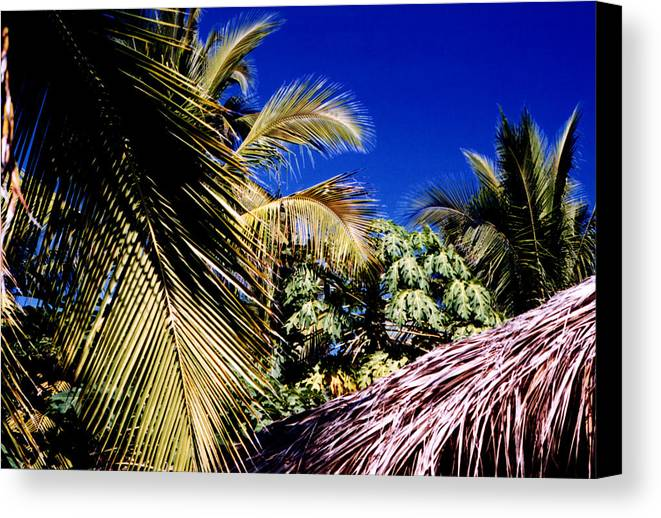 Palms Canvas Print featuring the photograph Palms All Around 2 by Lyle Crump