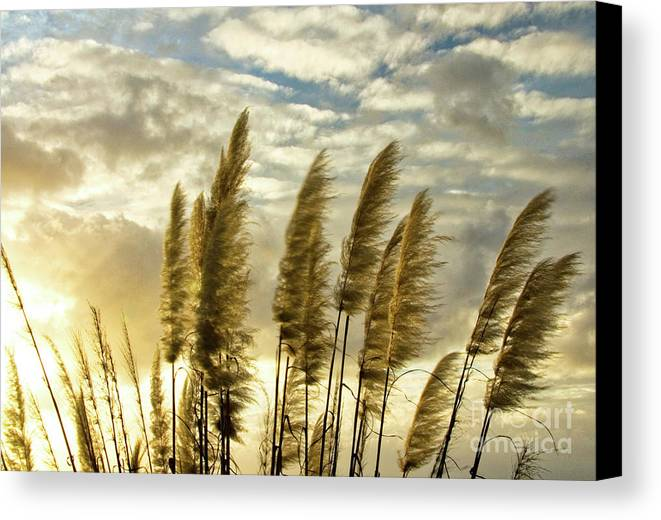 Nature Canvas Print featuring the photograph Pampas Grass by Julia Hiebaum