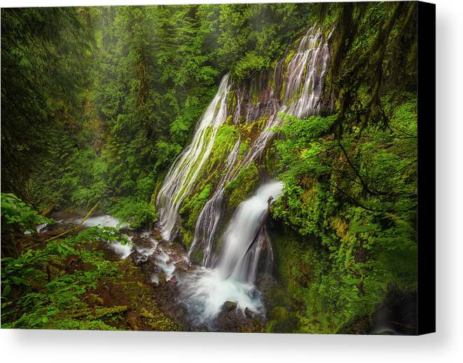 Washington Canvas Print featuring the photograph Panthers Lair by Jon Fischer