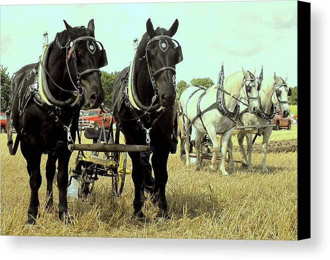 Horse Canvas Print featuring the photograph Posing by Ian MacDonald