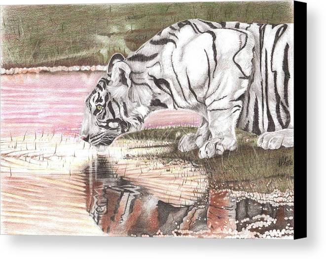 Tiger Canvas Print featuring the drawing Reflecting by Dustin Knighton