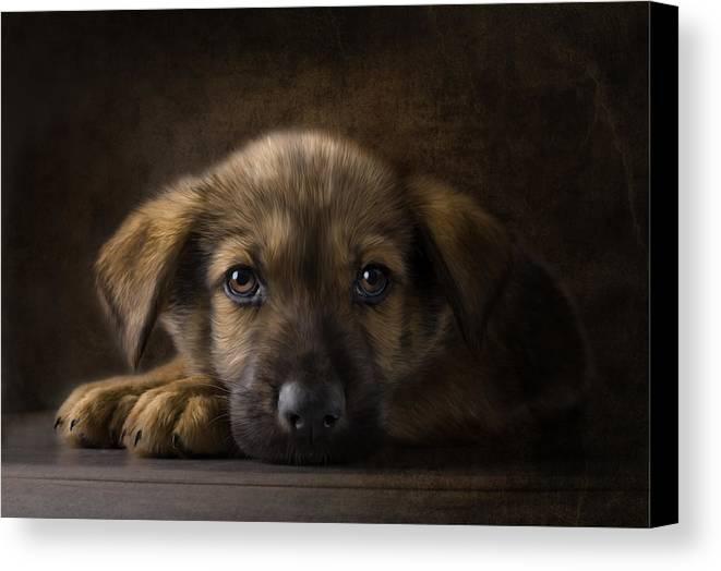 Puppy Canvas Print featuring the digital art Sad Puppy by Bob Nolin