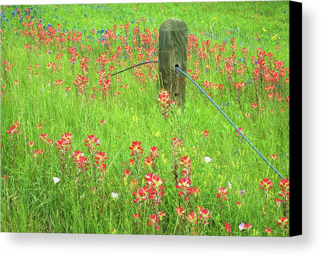 Texas Wildflowers Canvas Print featuring the photograph Texas Roadside Wonders 3 by Lynn Bauer