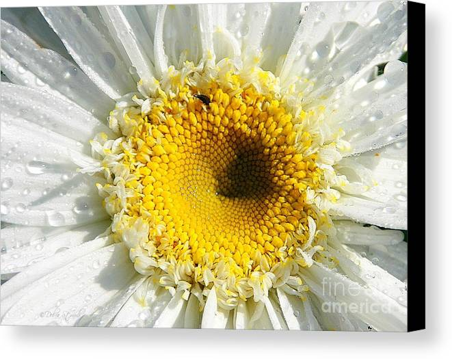 Daisy Canvas Print featuring the photograph The Heart Of A Daisy by Debra Straub