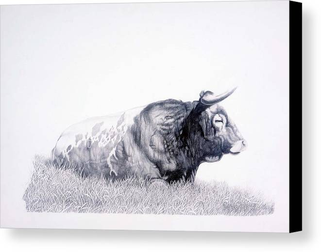Longhorn Canvas Print featuring the drawing The Herdmaster by Howard Dubois