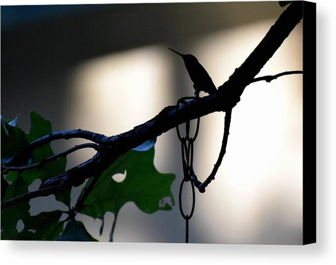 Bird Canvas Print featuring the photograph Todays Art 1244 by Lawrence Hess