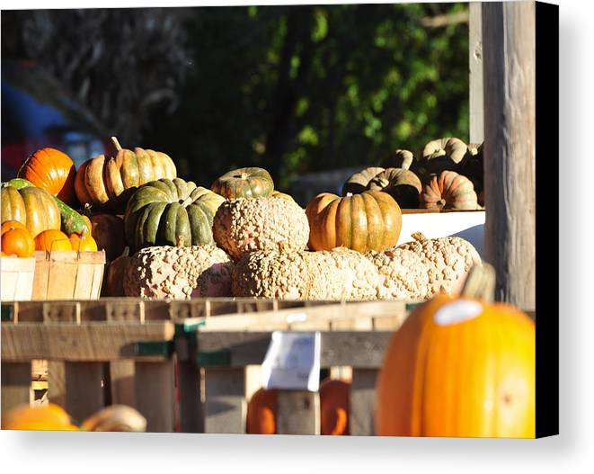 Still Life Canvas Print featuring the photograph Wart Pumpkins by Jan Amiss Photography