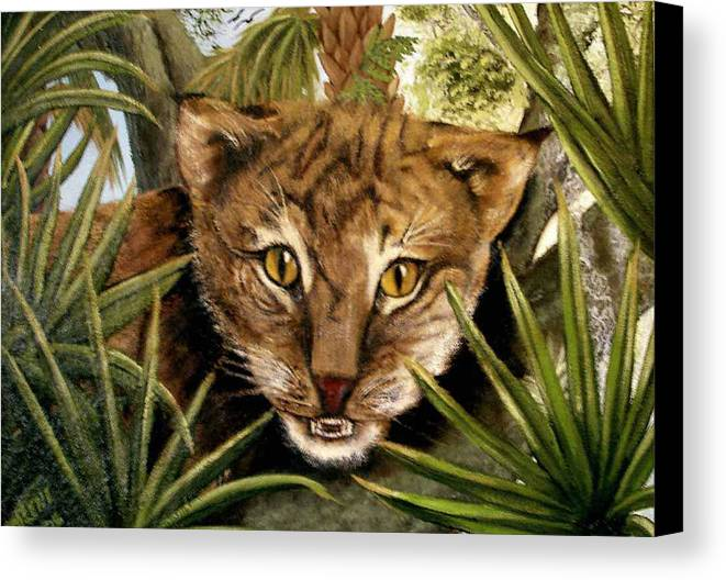Bobcat Canvas Print featuring the painting Watching Floridabobcat by Darlene Green