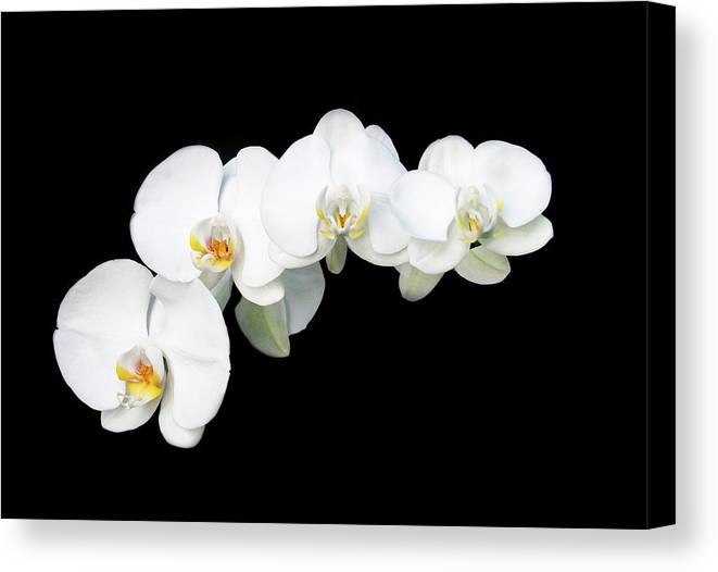 Orchids Canvas Print featuring the photograph White Orchid Flower by Michalakis Ppalis