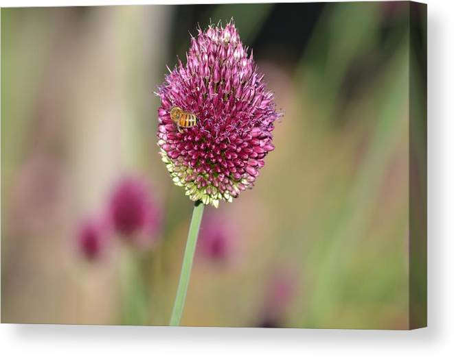 Beautiful Canvas Print featuring the photograph Beautiful Pink Flower With Bee by P S