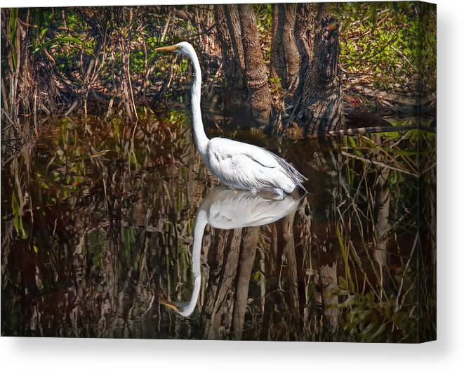 Everglades Canvas Print featuring the photograph Everglades by Hanny Heim