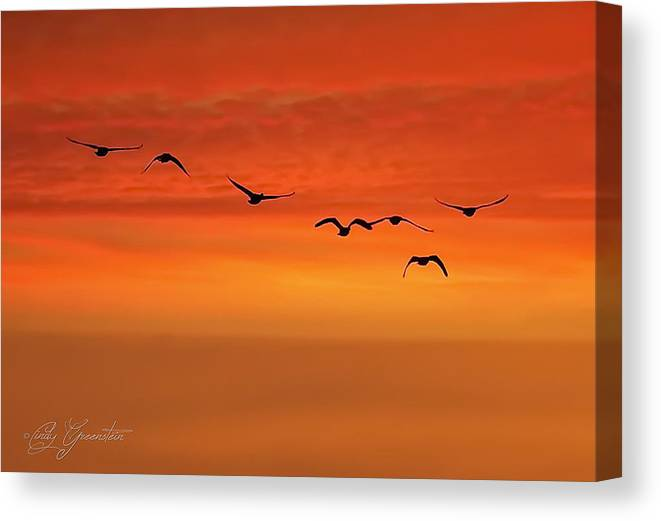 Birds Canvas Print featuring the photograph Flying South by Cindy Greenstein