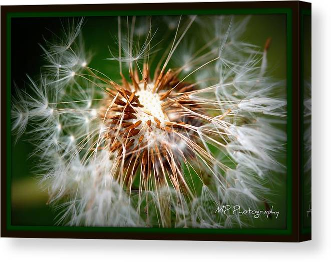 Flowers Canvas Print featuring the photograph Going Bald by Michaela Preston