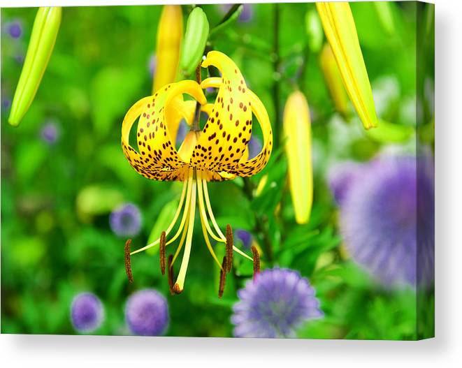 Flower Canvas Print featuring the photograph Hanging Lily by James Darmawan