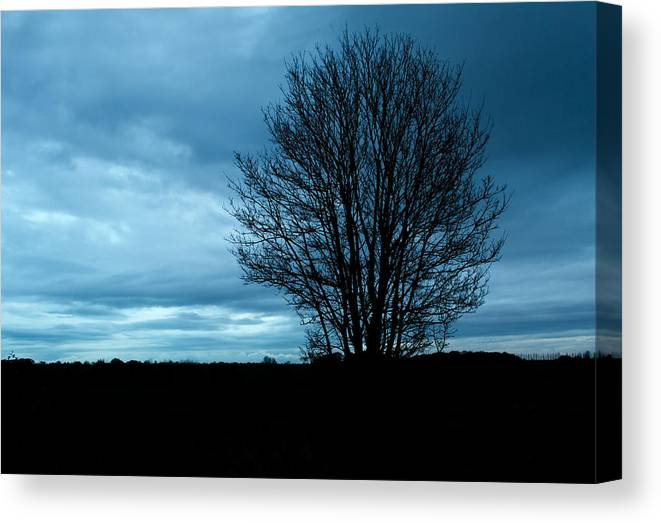 Aging Canvas Print featuring the photograph Lone Tree At Dusk by Fizzy Image