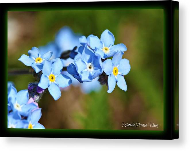 Flowers Canvas Print featuring the photograph Soft Blue by Michaela Preston