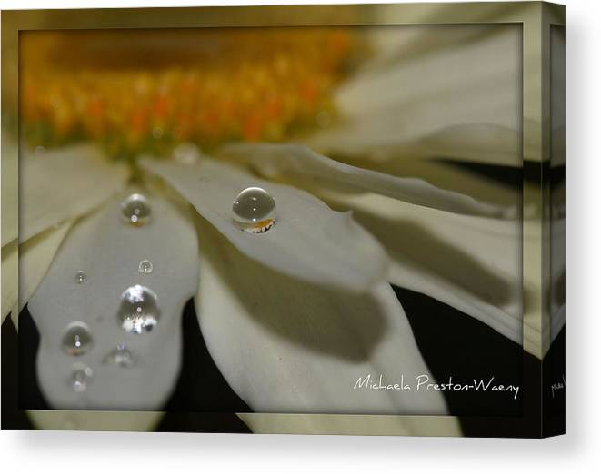 Water Canvas Print featuring the photograph Sunshine by Michaela Preston