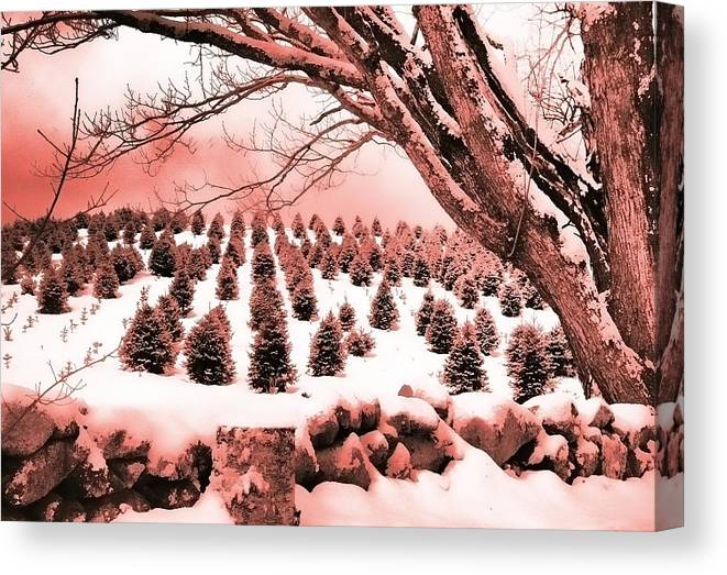 Christmas Canvas Print featuring the photograph The Rocks In Winter by Jill Brooks