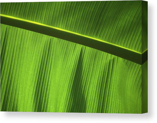 Plant Canvas Print featuring the photograph Green Leaf, Close-up by Axiom Photographic