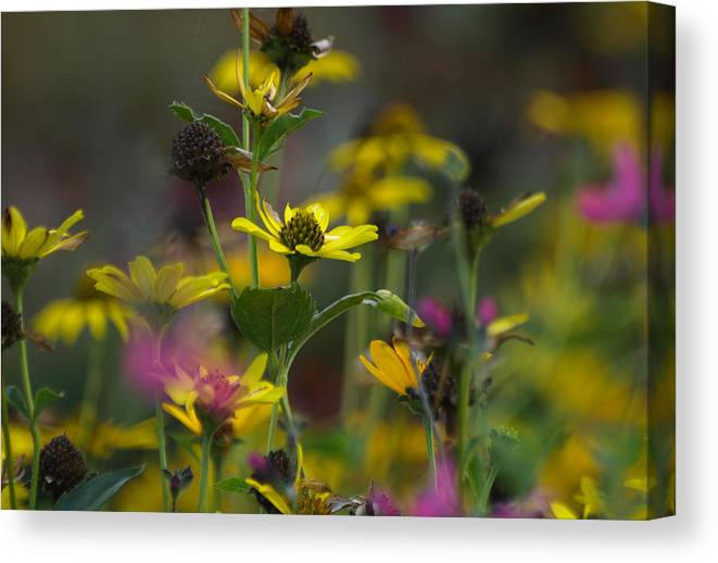 Ann Keisling Canvas Print featuring the photograph Field Of Flowers by Ann Keisling