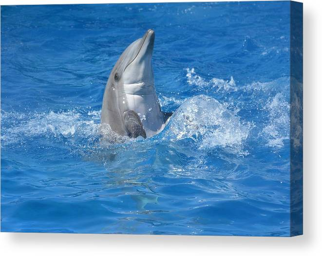 Bottle Nose Dolphin Canvas Print featuring the photograph Out Of The Blue 2 by Fraida Gutovich