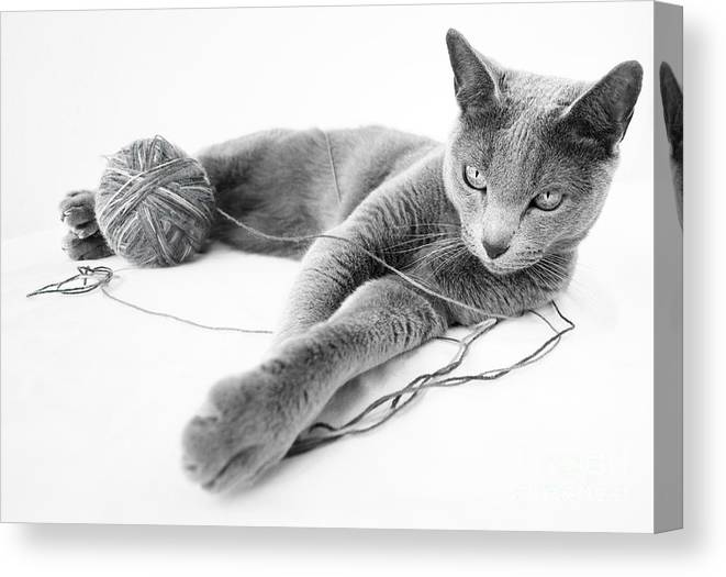 Russian Canvas Print featuring the photograph Russian Blue by Nailia Schwarz