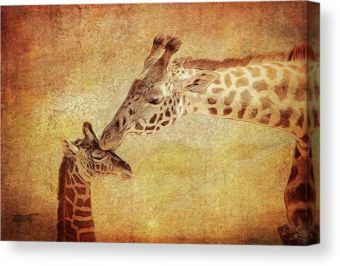 Giraffe Canvas Print featuring the photograph A Mother's Kiss Painted 2 by Judy Vincent