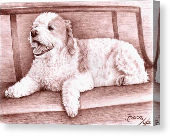 Dog Canvas Print featuring the drawing Baco by Nicole Zeug