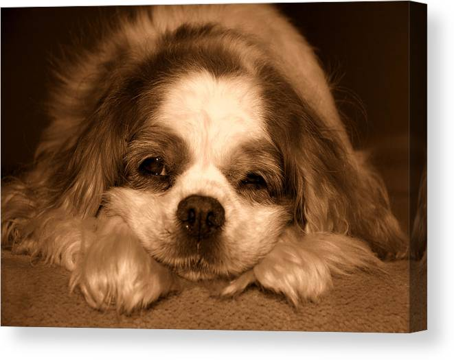 Dog Canvas Print featuring the photograph Belle Awake by Kathi Shotwell