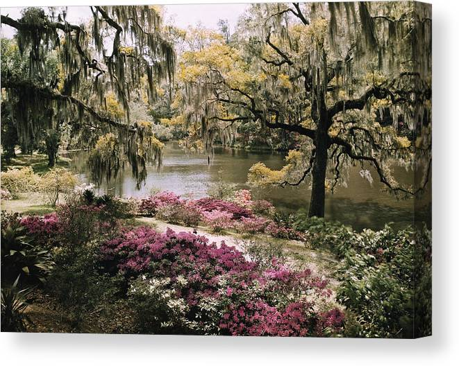 Day Canvas Print featuring the photograph Blooming Shrubs And Trees by B. Anthony Stewart