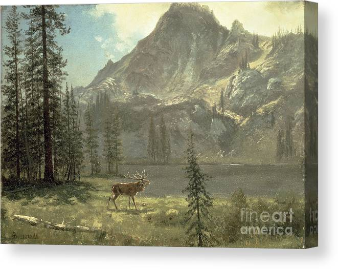 Bierstadt Canvas Print featuring the painting Call Of The Wild by Albert Bierstadt
