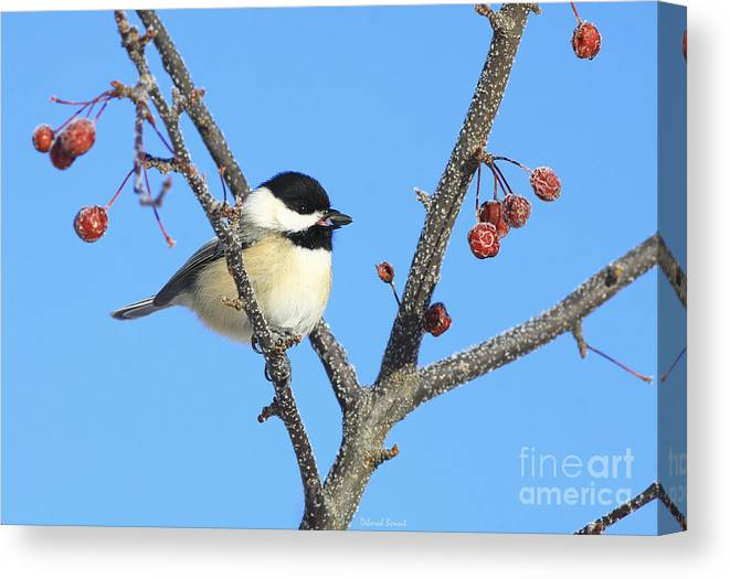 Bird Canvas Print featuring the photograph I Got My Seed by Deborah Benoit