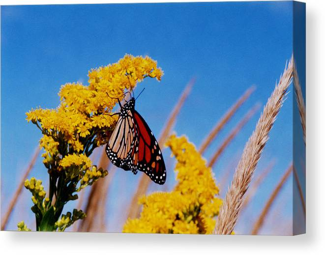 My Peace Canvas Print featuring the photograph My Peace by Tom LoPresti