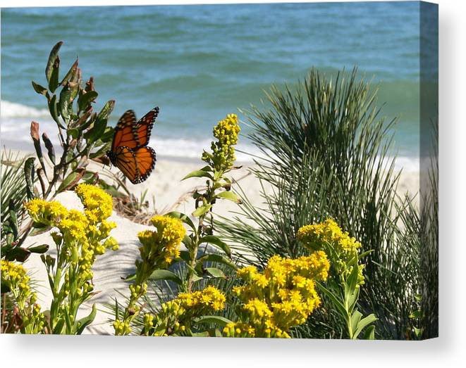 Monarch Canvas Print featuring the photograph Nice.... by Tom LoPresti