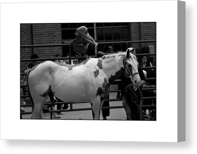 Horse Canvas Print featuring the photograph Painted Horse by Filipe N Marques