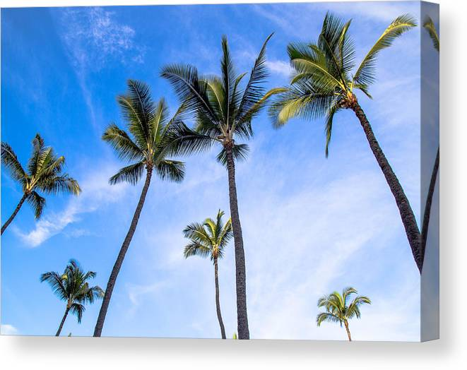 Palms Canvas Print featuring the photograph Seven Palms Of Paradise by Robin Krueger