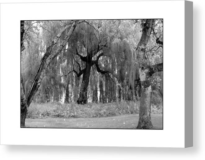 Willow Canvas Print featuring the photograph Willows by Filipe N Marques