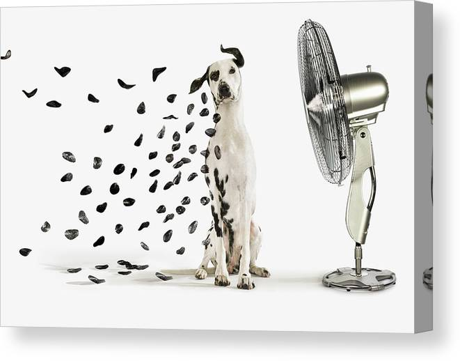 Pets Canvas Print featuring the photograph Spots Flying Off Dalmation Dog by Gandee Vasan