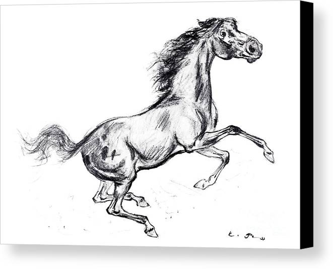 Mustang Canvas Print featuring the drawing Mustang by Kurt Tessmann