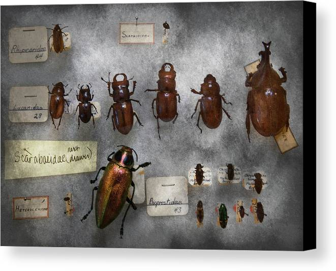 Hdr Canvas Print featuring the photograph Bug Collector - The Insect Collection by Mike Savad