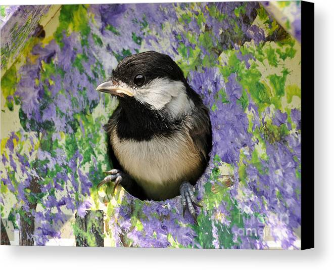 Birds Canvas Print featuring the photograph First Glance At The Big World by Kathy Baccari