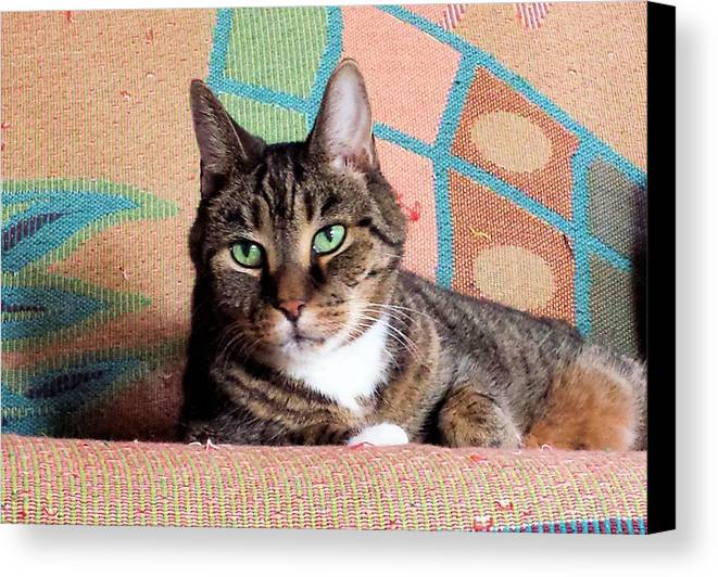 Cat Canvas Print featuring the photograph Murphy by Diane Carlson
