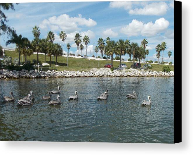 Pelican Canvas Print featuring the pyrography Pelicans Parade by To-Tam Gerwe