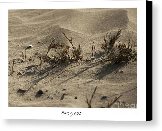 Sea Grass In The Sand Canvas Print featuring the photograph Sea Grass by Artist and Photographer Laura Wrede