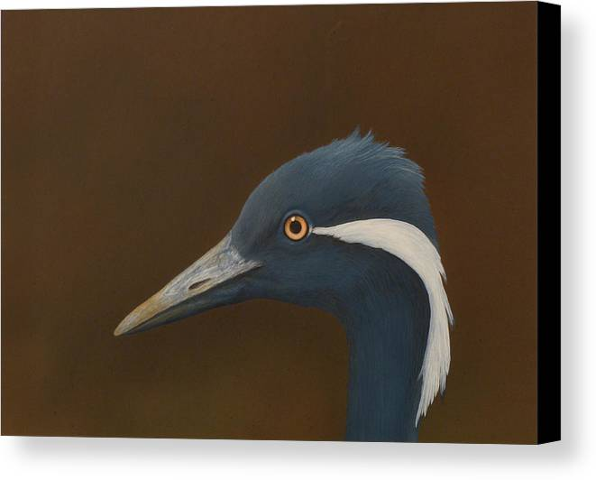 Demoiselle Canvas Print featuring the painting Demoiselle Crane by Norm Holmberg