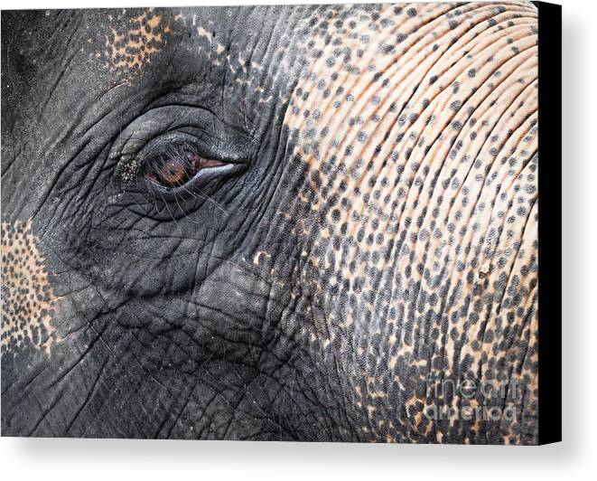 African Canvas Print featuring the photograph Elephant Close-up Portrait by Johan Larson