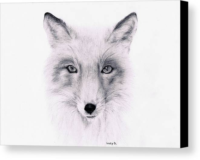 Fox Canvas Print featuring the drawing Fox by Lucy D