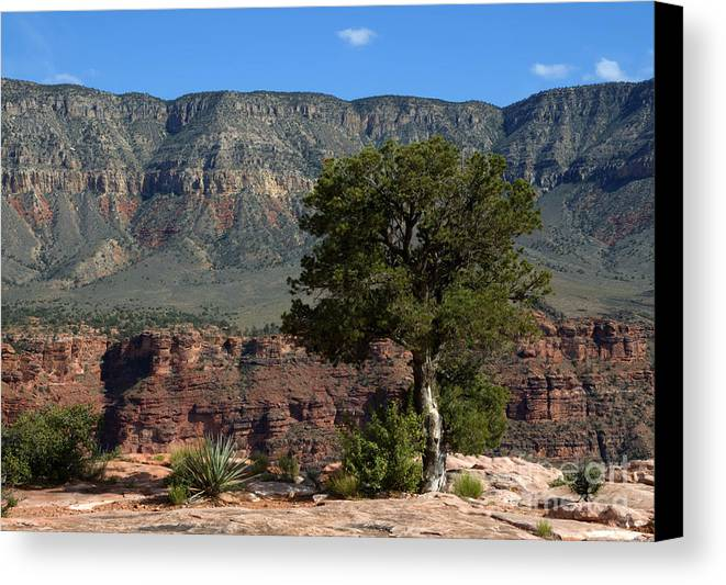 Trees Canvas Print featuring the photograph On The Edge by Vivian Christopher